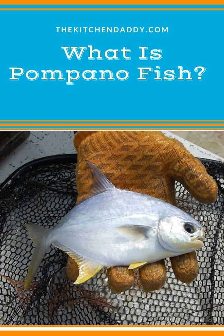 What Is Pompano Fish